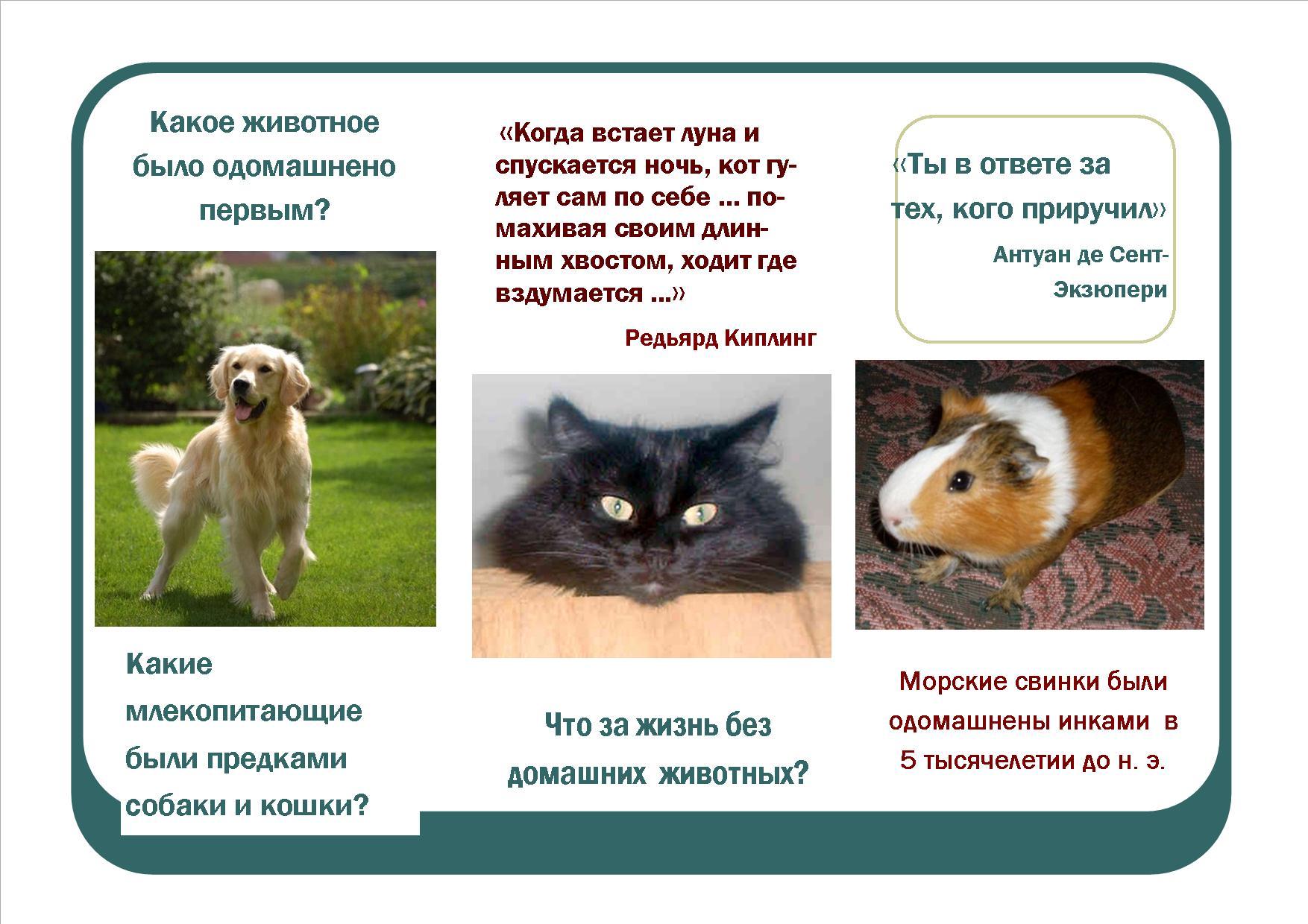 Правила продажи домашних животных питомцев в России
