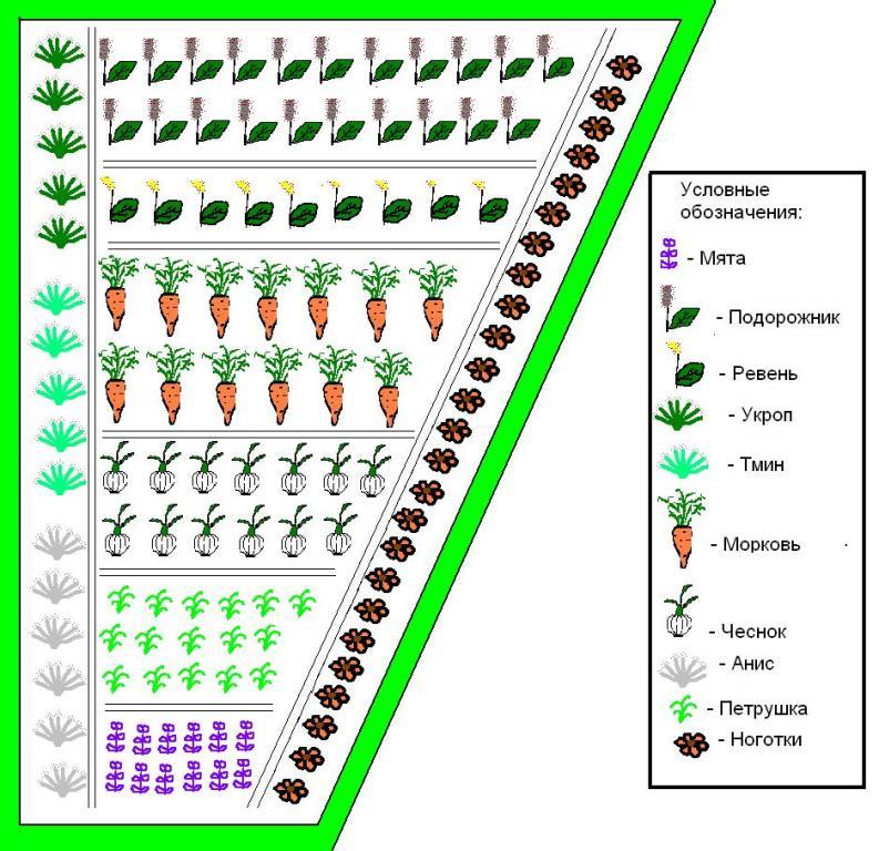 огороде схема посадки овощей в