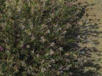 Степная растительность.JPG