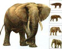 Эволюция слонов.jpg